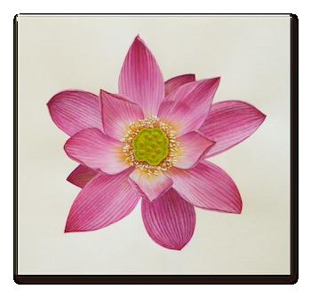lotus_g_2013