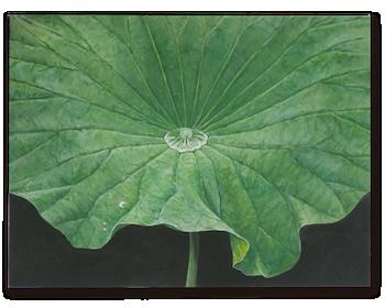 lotus_leaf_g_2013